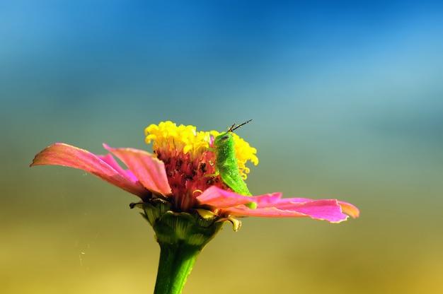 庭の花とバッタ