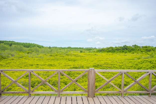 ゴールデンメドープロングとしても知られるマングローブ林