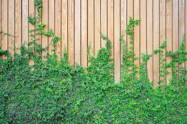 つるの木製の壁