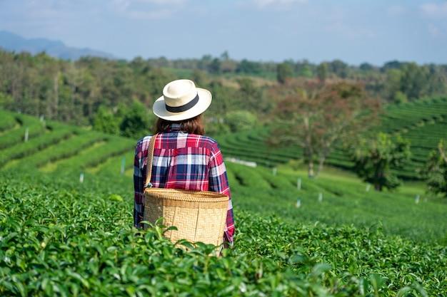 茶畑から茶葉を拾うアジアの女性の手