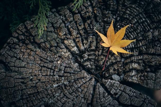 乾燥カエデの葉が地面に落ちる
