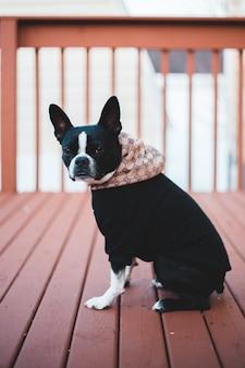 Черно-белая короткошерстная собака на коричневом деревянном полу