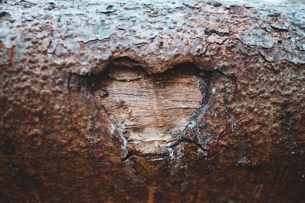 写真をクローズアップで茶色の木のログ