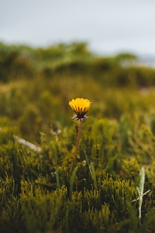 ティルトシフトレンズの黄色い花