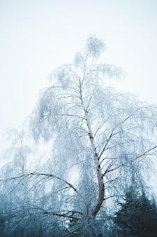 曇り空の下の白い葉の木