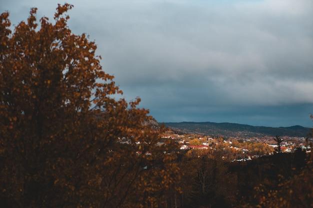 茶色の木のある風景