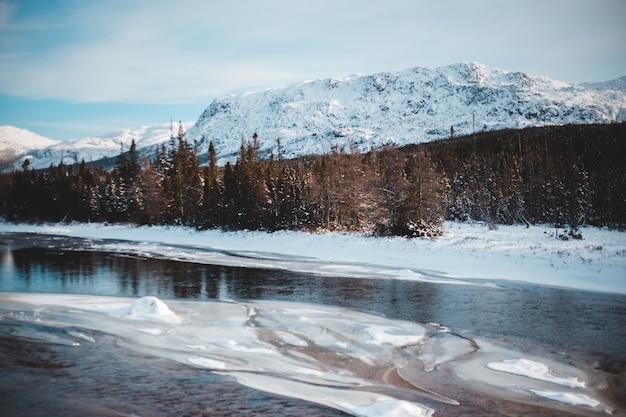 茶色の木の近くの雪に覆われた山