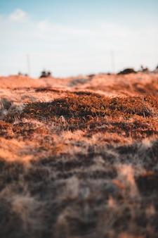 Коричневое поле травы в дневное время