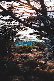 Коричневое безлистное дерево возле водоема