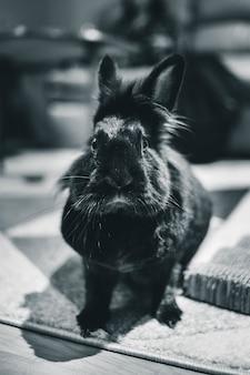 ウサギのグレースケール写真