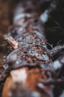 茶色と黒の木のログをクローズアップ
