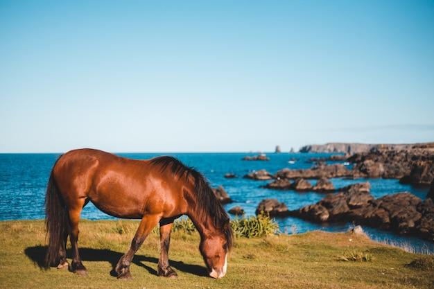 Коричневая лошадь ест на траве