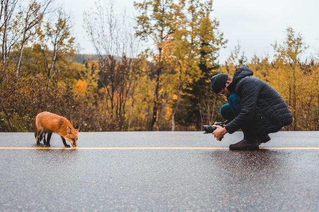 赤狐の写真を撮る男