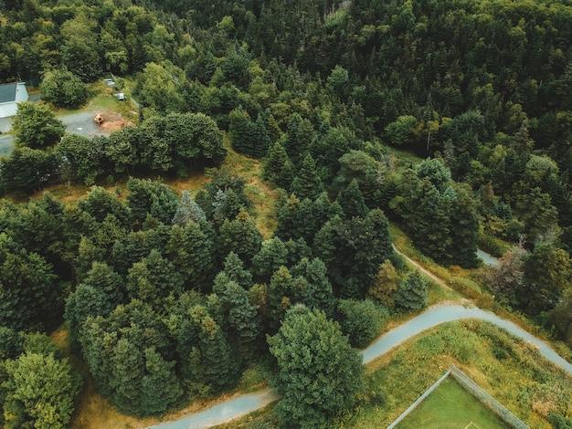 Аэрофотоснимок зеленых деревьев
