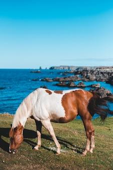 Белая и коричневая лошадь на траве