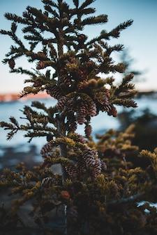 Зеленое и коричневое растение в дневное время