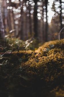 Зеленые травы и мох крупным планом