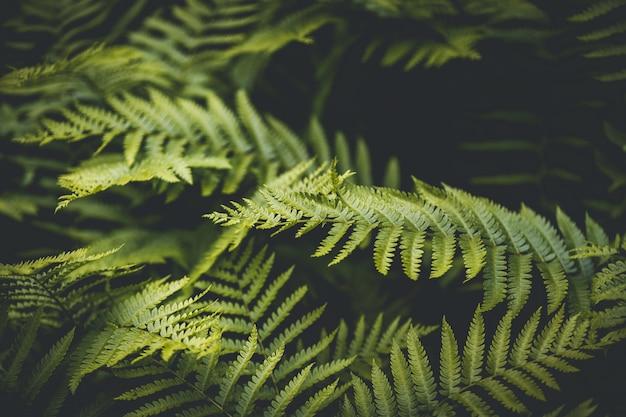 シダの緑の葉