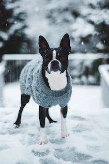 Черно-белая собака с серым вязаным свитером на снежном поле