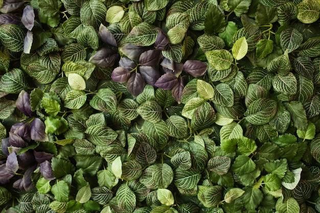 緑の葉で作られた創造的なレイアウト。フラットレイ。自然のコンセプト
