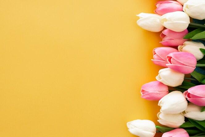 黄色の背景にピンクと白のチューリップ