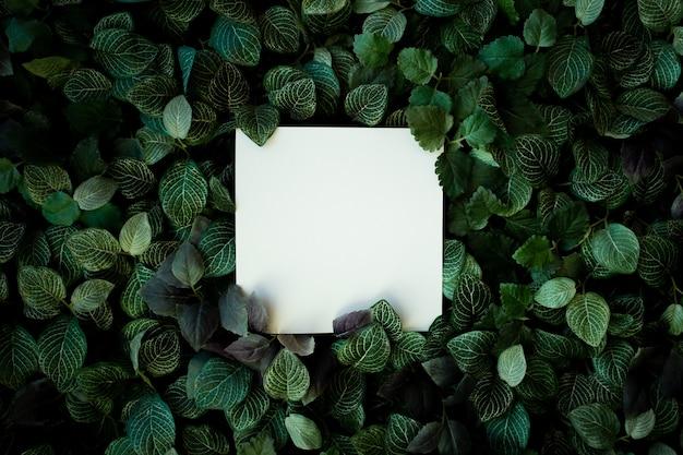 空白の名刺と熱帯の葉の背景