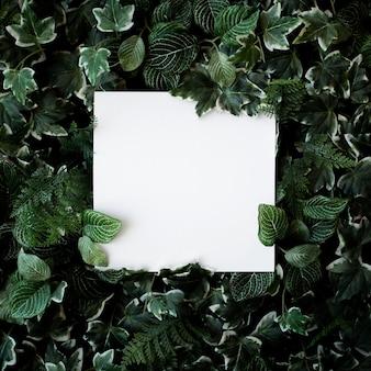 ホワイトペーパーフレームと緑の葉の背景