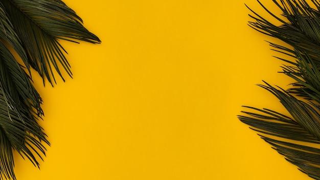 明るい黄色の背景に熱帯のヤシの葉