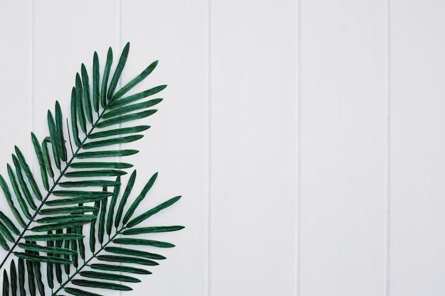 右手に白い木の背景にパームが葉