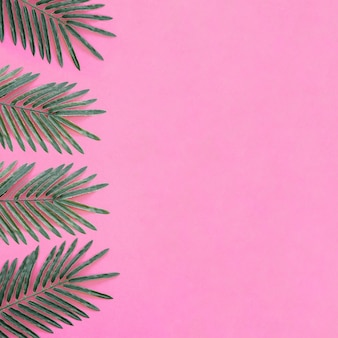 右のスペースがあるピンクの背景に美しいヤシの葉