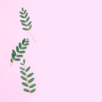 ライトピンクの背景に美しい葉