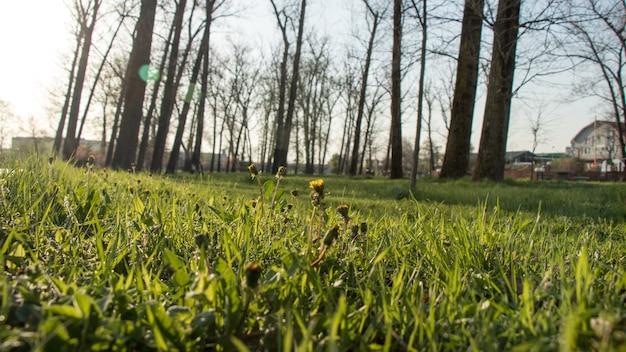 緑の草原の近く