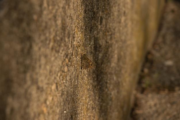 コンクリートに焦点を当てた蝶