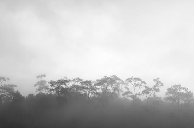 霧の中の森、黒と白