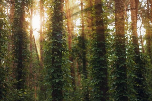 Солнечные лучи вливаются в летний лес