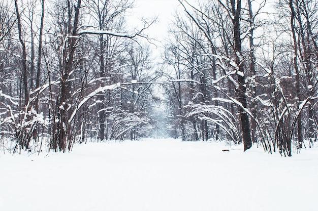 雪に覆われた木、スローモーションで冬の公園で雪が降る