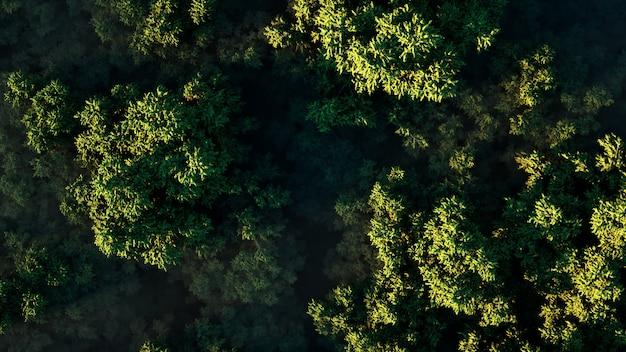 晴れた日に霧の中で厚い緑の森に沈む夕日