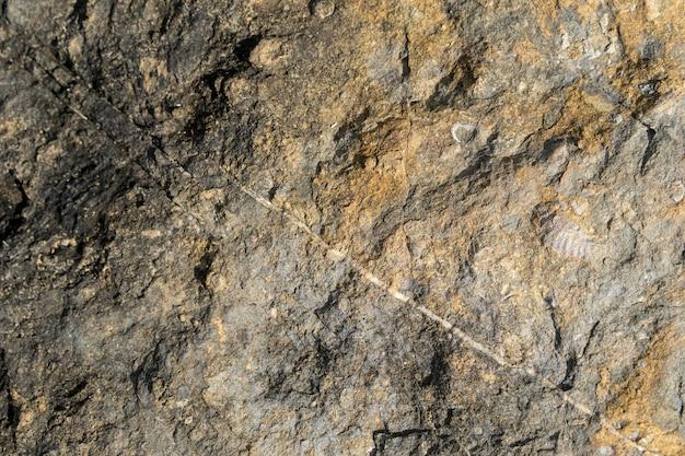 岩石の化石は原始生物を表しています。