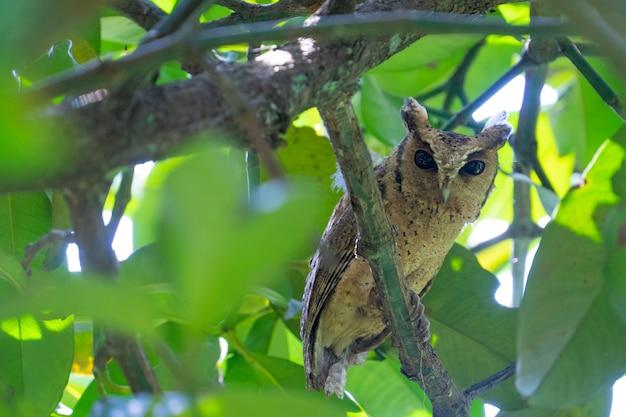 フクロウはこのように見ています。果樹園の庭師の日中のマットレス。