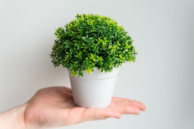 白い背景の上の手に白い鍋に緑の植物。ケアとガーデニングのコンセプト