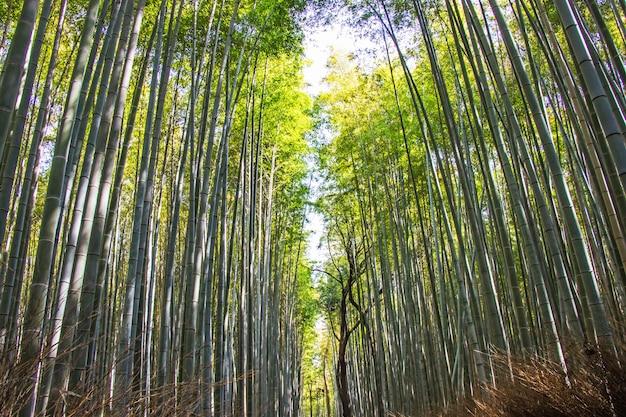 京都、日本の日照の背景にある嵐山の竹林