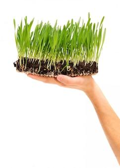 Растения в руке