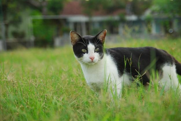 飼い猫は緑の野原で正面を見つめます