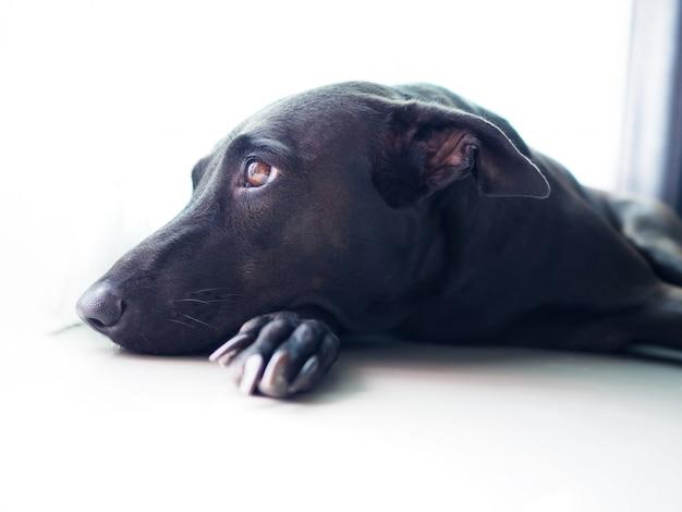 犬の飼い主を探している黒犬の孤独な顔を閉じる