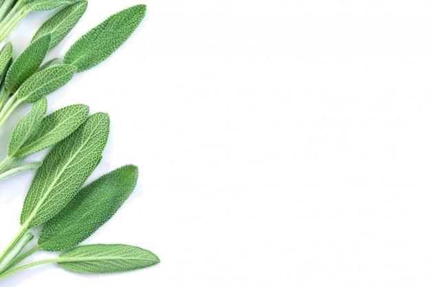 白の新鮮な緑のセージハーブの葉を閉じる