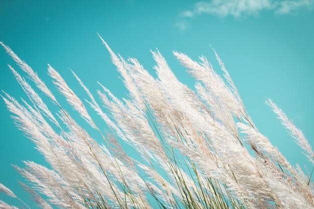レトロなスカイブルーの背景と抽象的な柔らかい白い羽の芝生
