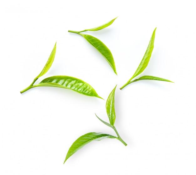 白い壁に茶葉。
