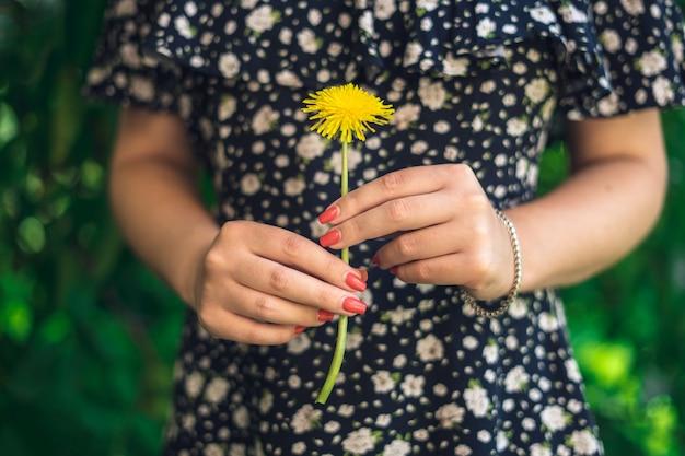黄色のタンポポ。黄色の花を保持している女性の手。