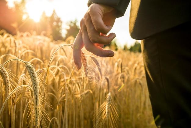 成熟した小麦の耳に触れて手を差し伸べる黄金の小麦畑を歩くビジネスマン