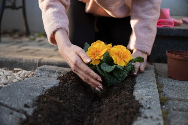 美しい黄色い花を植える
